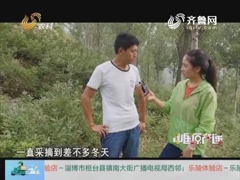 20161206《中国原产递》:黄荆子健康枕