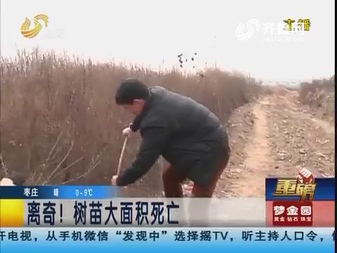 【重磅】青岛:离奇!树苗大面积死亡