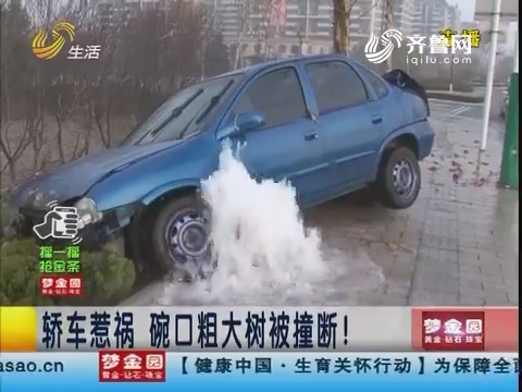 潍坊:轿车惹祸 碗口粗大树被撞断!