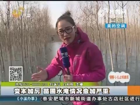 新泰:变本加厉 苗圃水淹情况愈加严重