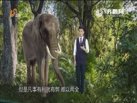"""调查:西双版纳""""人象之争""""如何破解?"""