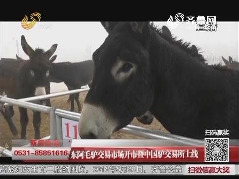 东阿毛驴交易市场开市暨中国驴交易所上线