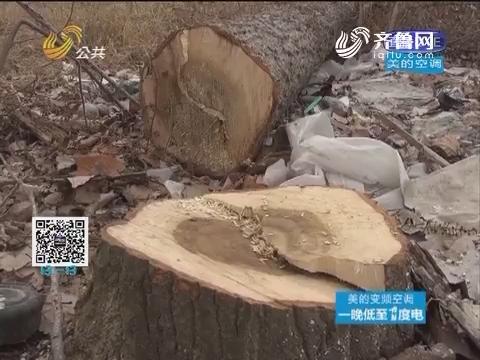 日照:千棵树木被砍 村民损失惨重