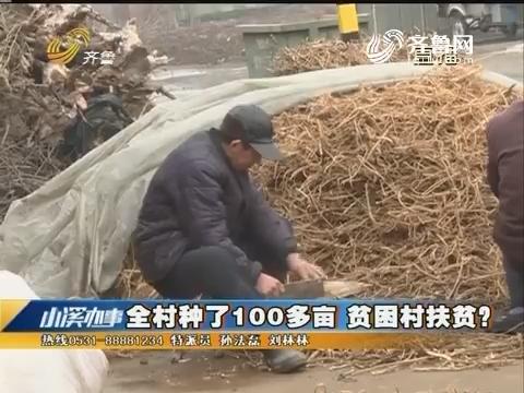 济南:农业转型种黄芪 收获后销售难