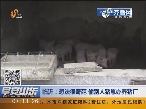 临沂:想法很奇葩 偷别人猪崽办养猪厂