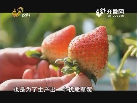 """中国种植匠:""""莓""""不胜收"""