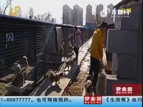 烟台:近千只流浪狗 收容所断了粮?
