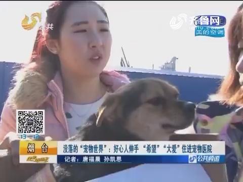 """烟台:没落的""""宠物世界"""" 好心人伸手""""希望""""""""大爱""""住进宠物医院"""