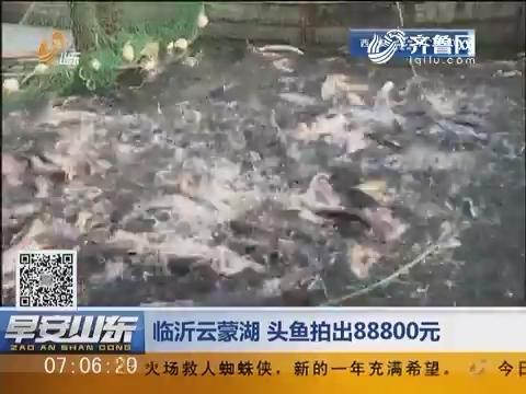 临沂云蒙湖 头鱼拍出88800元