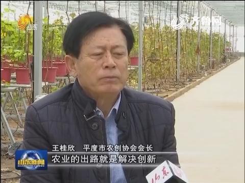 """【我的2016】王桂欣:""""创""""时代 我是新农民"""