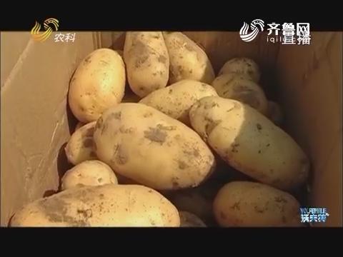 土豆价格为何突涨