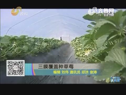 三膜覆盖种草莓