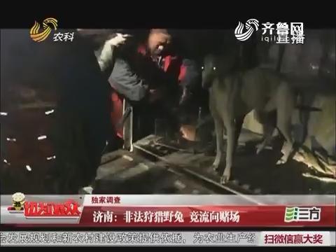 济南:非法狩猎野兔 竟流向赌场