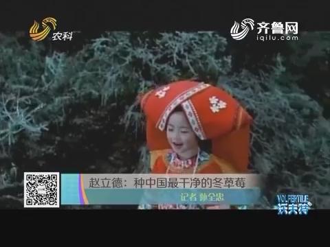 赵立德:种中国最干净的冬草莓