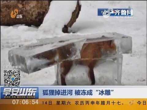 """狐狸掉进河 被冻成""""冰雕"""""""