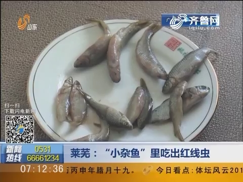 """莱芜:""""小杂鱼""""里吃出红线虫"""