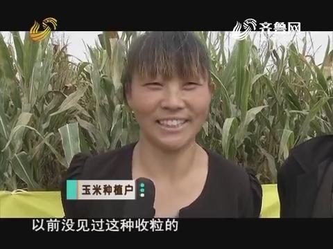 籽粒直收 像收小麦一样收玉米