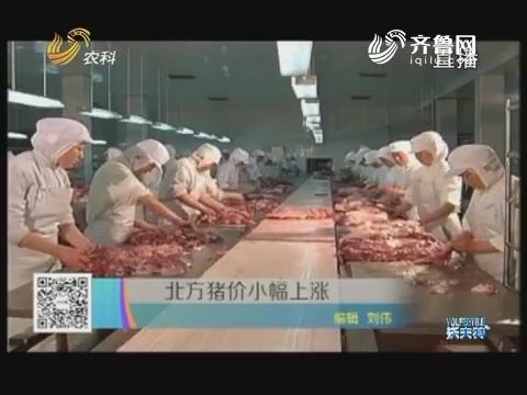 北方猪价小幅上涨