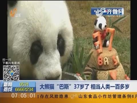 """大熊猫""""巴斯""""37岁了 相当人类一百多岁"""