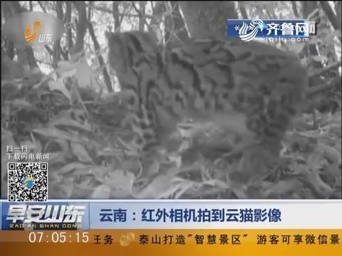 云南:红外相机拍到云猫影像