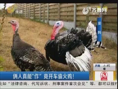 """淄博:俩人真能""""作"""" 竟开车偷火鸡!"""
