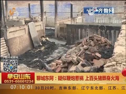 聊城东阿:疑似鞭炮惹祸 上百头猪葬身火海
