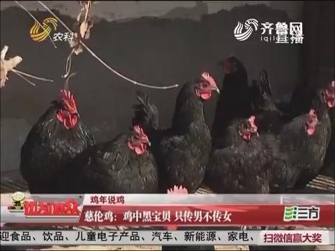 【鸡年说鸡】慈伦鸡:鸡中黑宝贝 只传男不传女