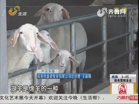 高密:肉羊养殖 如何确保安全?
