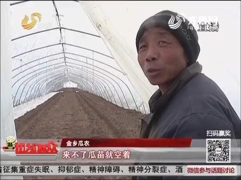 【独家调查】金乡:安信种苗爽约 300大棚无瓜苗可种
