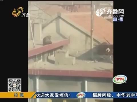 济南:不速之客 突然造访小山村