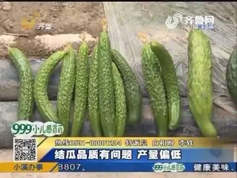 济阳:黄瓜正逢旺季却大面积死亡
