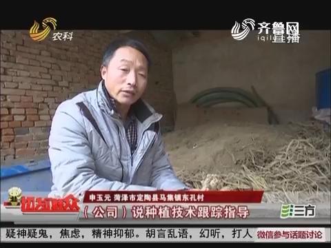 【独家调查】菏泽:种植中华家参 亩产能赚十万?