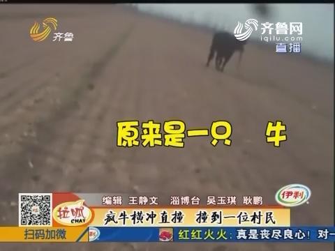 淄博:疯牛横冲直撞 撞到一位村民