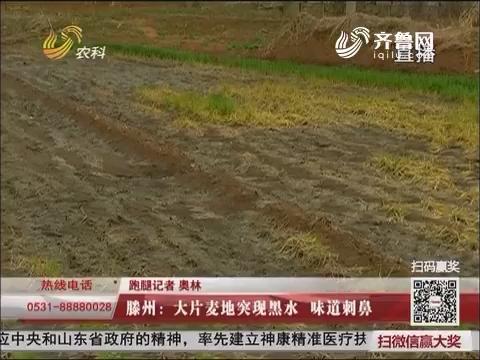 滕州:大片麦地突现黑水 味道刺鼻