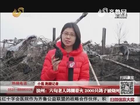 滨州:六旬老人鸽棚着火 2000只鸽子被烧死