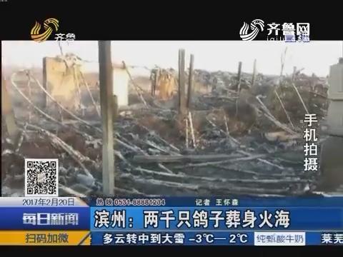 滨州:两千只鸽子葬身火海