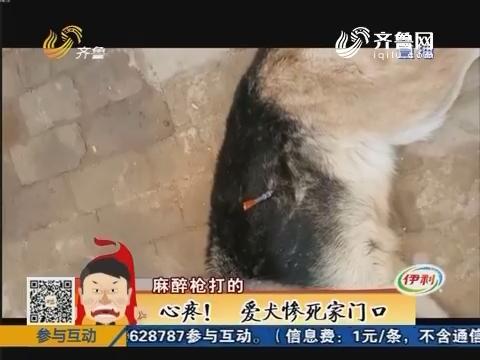 聊城:心疼!爱犬惨死家门口