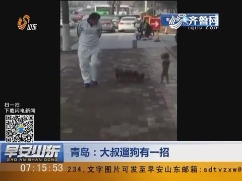 青岛:大叔遛狗有一招