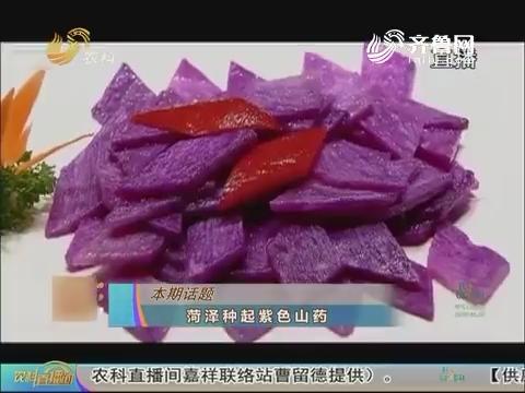 20170221《农科直播间》:菏泽种起紫色山药