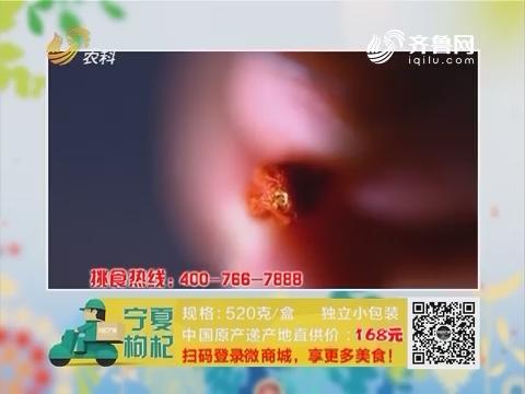 20170222《中国原产递》:宁夏枸杞