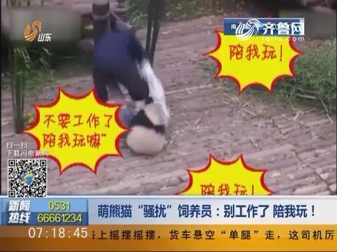 """萌熊猫""""骚扰""""饲养员:别工作了 陪我玩!"""