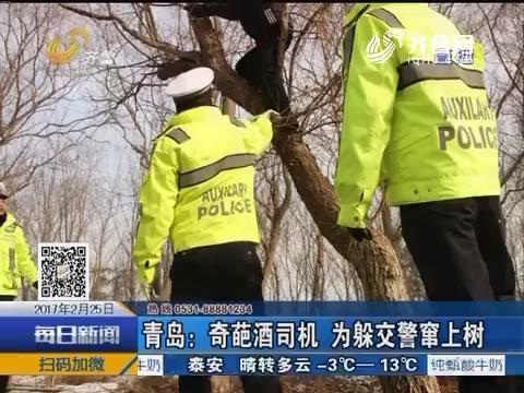 青岛:奇葩酒司机 为躲交警窜上树