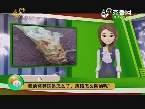 【庄稼医院远程会诊】大姜癞皮病怎么预防和根治呢?