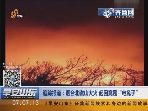 """追踪报道:烟台北磁山大火 起因竟是""""电兔子"""""""