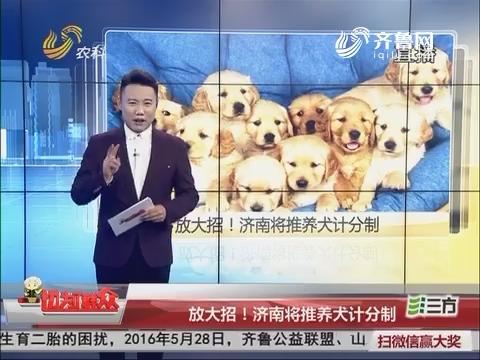 放大招!济南将推养犬计分制