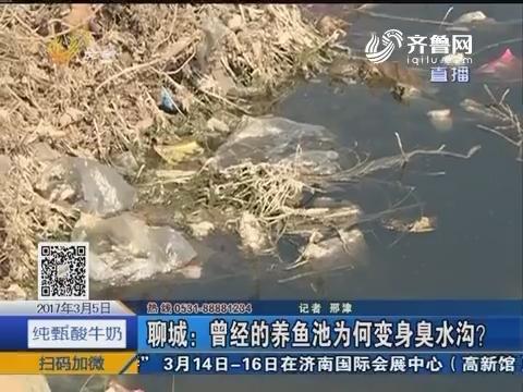 聊城:曾经的养鱼池为何变身臭水沟?
