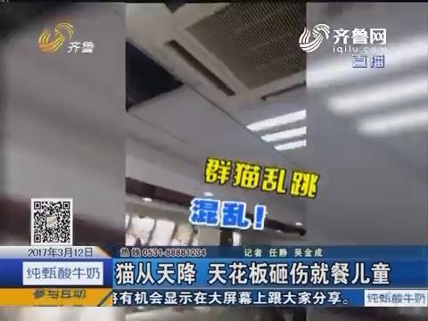 济南:猫从天降 天花板砸伤就餐儿童