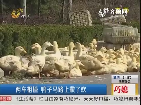 潍坊:两车相撞 鸭子马路上撒了欢