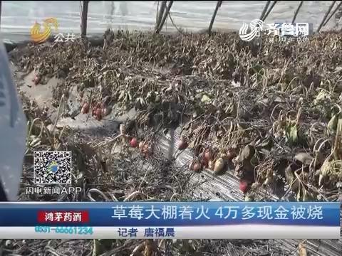 济南:草莓大棚着火 4万多现金被烧