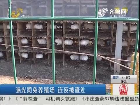 济南:曝光獭兔养殖场 连夜被查处
